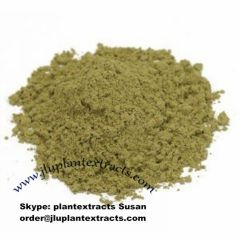 Buy Raw Powder Ginkgo Biloba Extracts Online