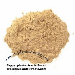 Astragalus Root Extract Powder USA UK Canada Turky