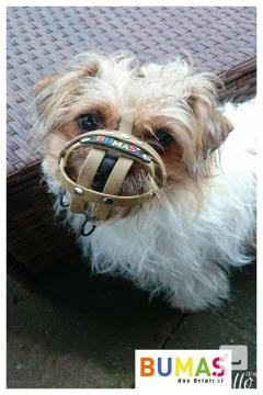 Buy Best Basket Muzzle