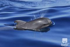 Tenerife Half-Day Whale And Dolphin Tour - Freeb
