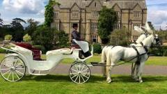 Horse & Carriage Wedding Service In Kent